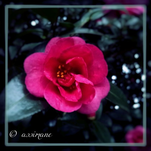 Fotor_144636692262112.jpg