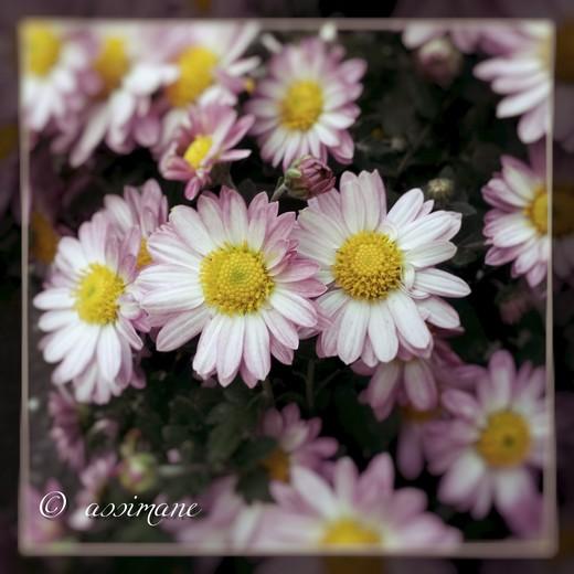 Fotor_144636710874764.jpg