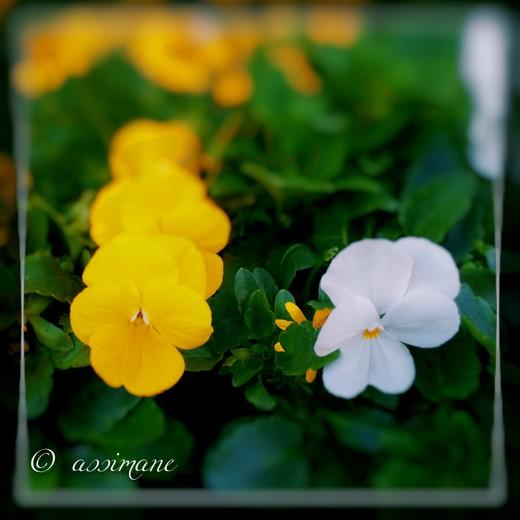 Fotor_144636761076275.jpg