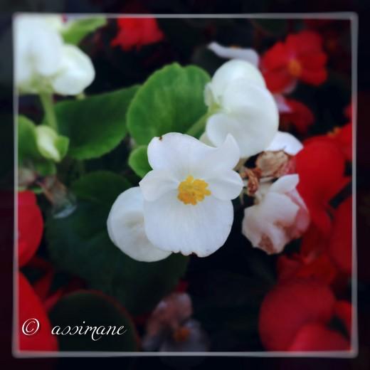 Fotor_144688183809188.jpg