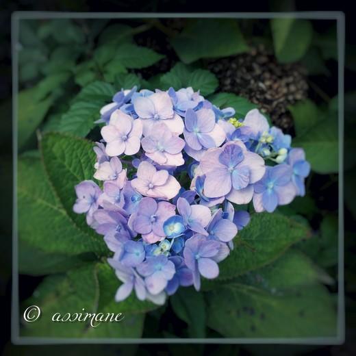 Fotor_144688198174047.jpg
