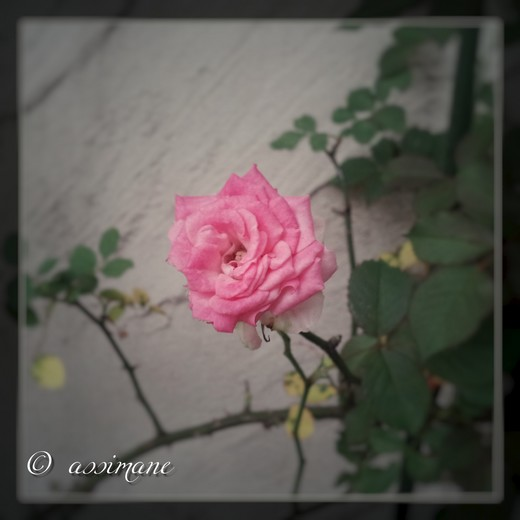 Fotor_144850736727162.jpg
